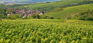 Vineyards at Irancy